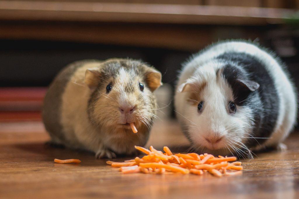 Alimento para hamster