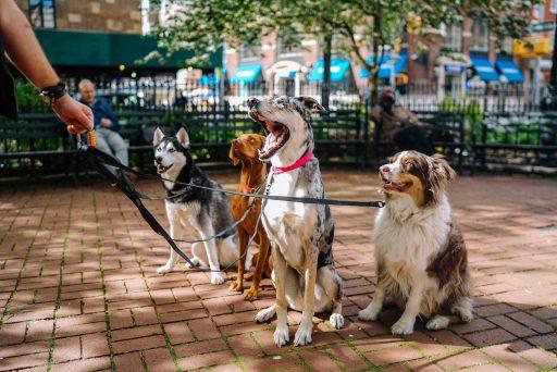 Para perros