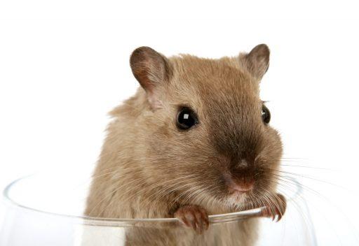 Productos para hamster