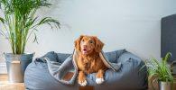 camas para perros amazon