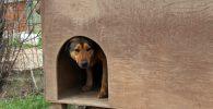 Casas para perros caseras