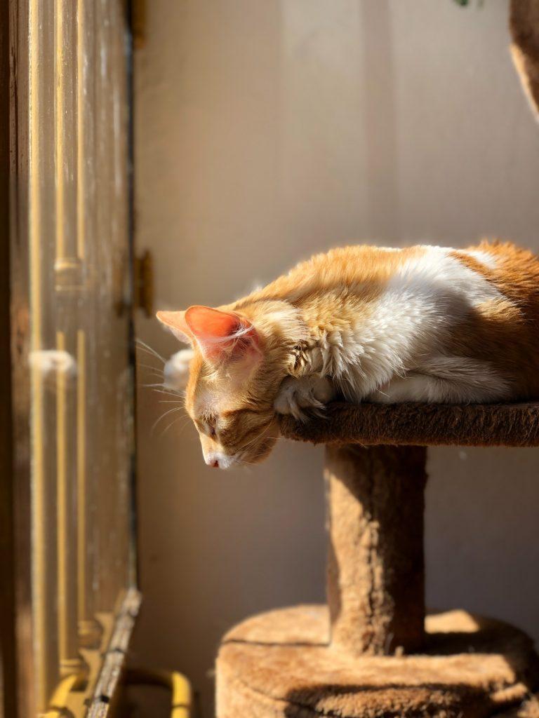 Rascador para gatos madera