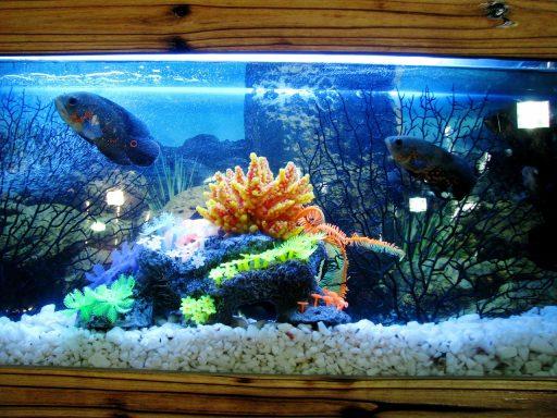 acuarios caseros para peces