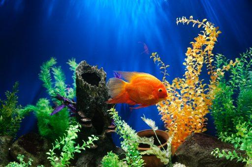 El mejor acuario