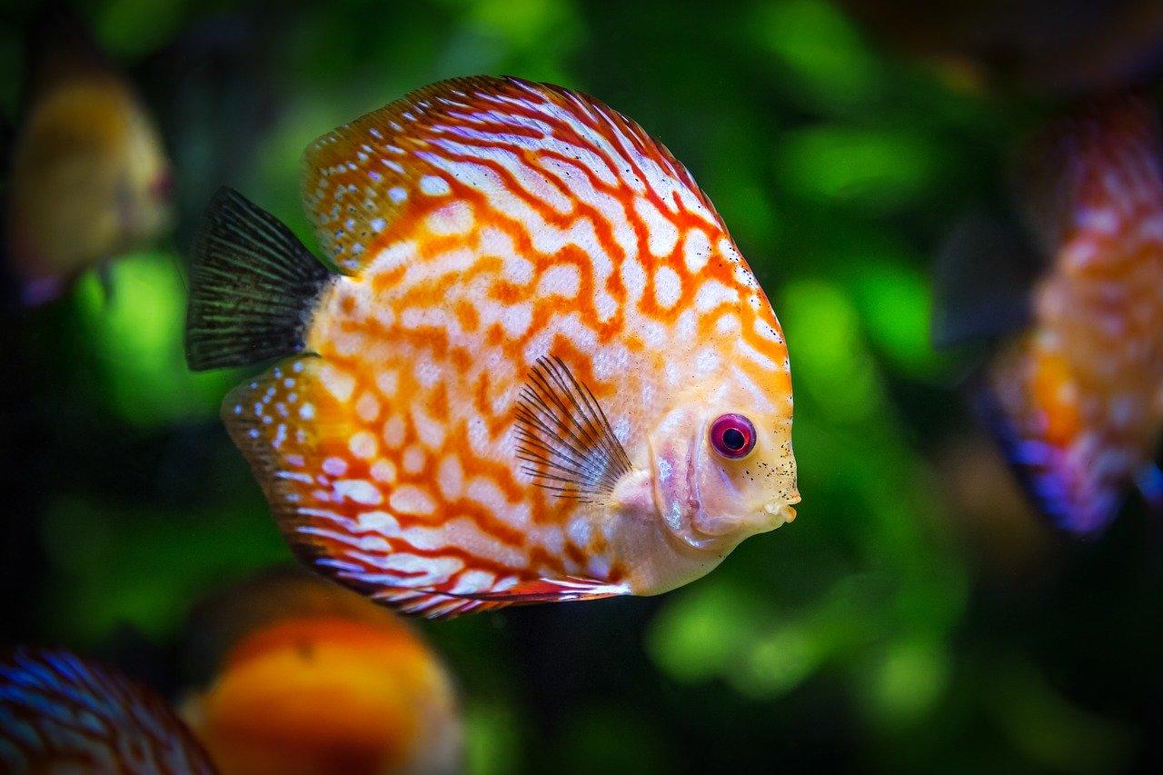 Tipos de acuarios marinos