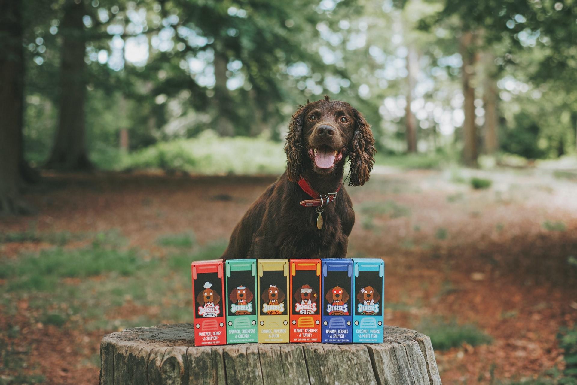 Premios para perro