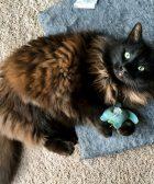juguetes para gato diy