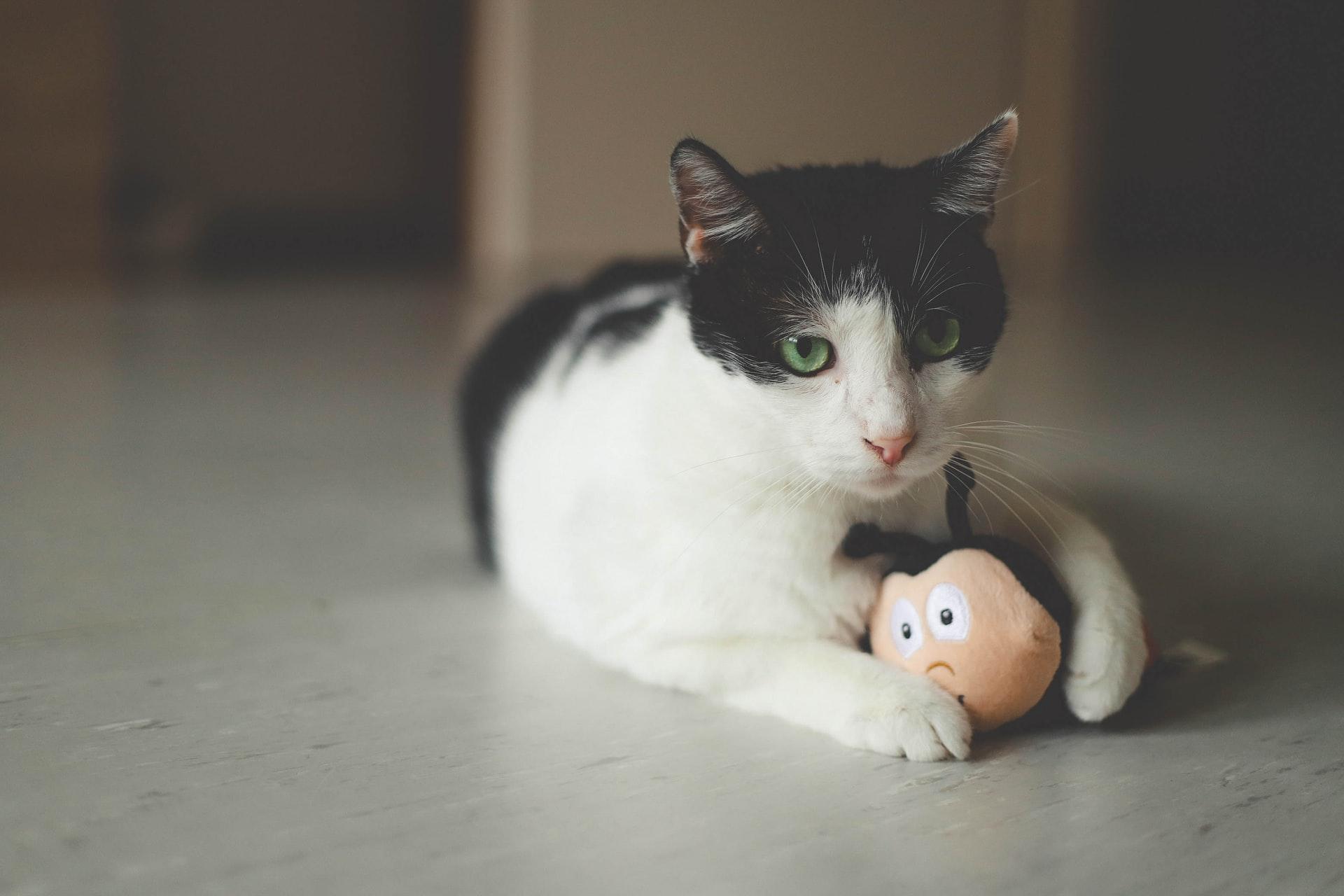 pelotas para gatos