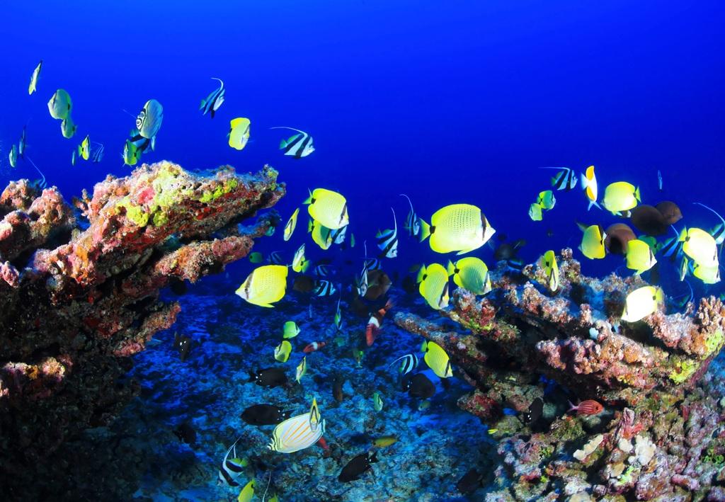 Acuario tropical marino