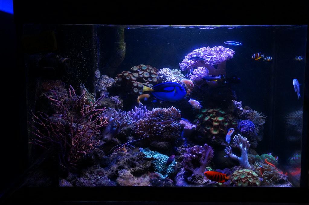 luces para acuario marino